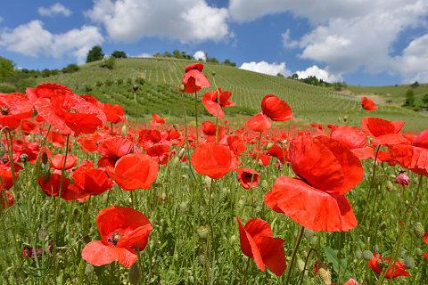 Piemont und Ligurien