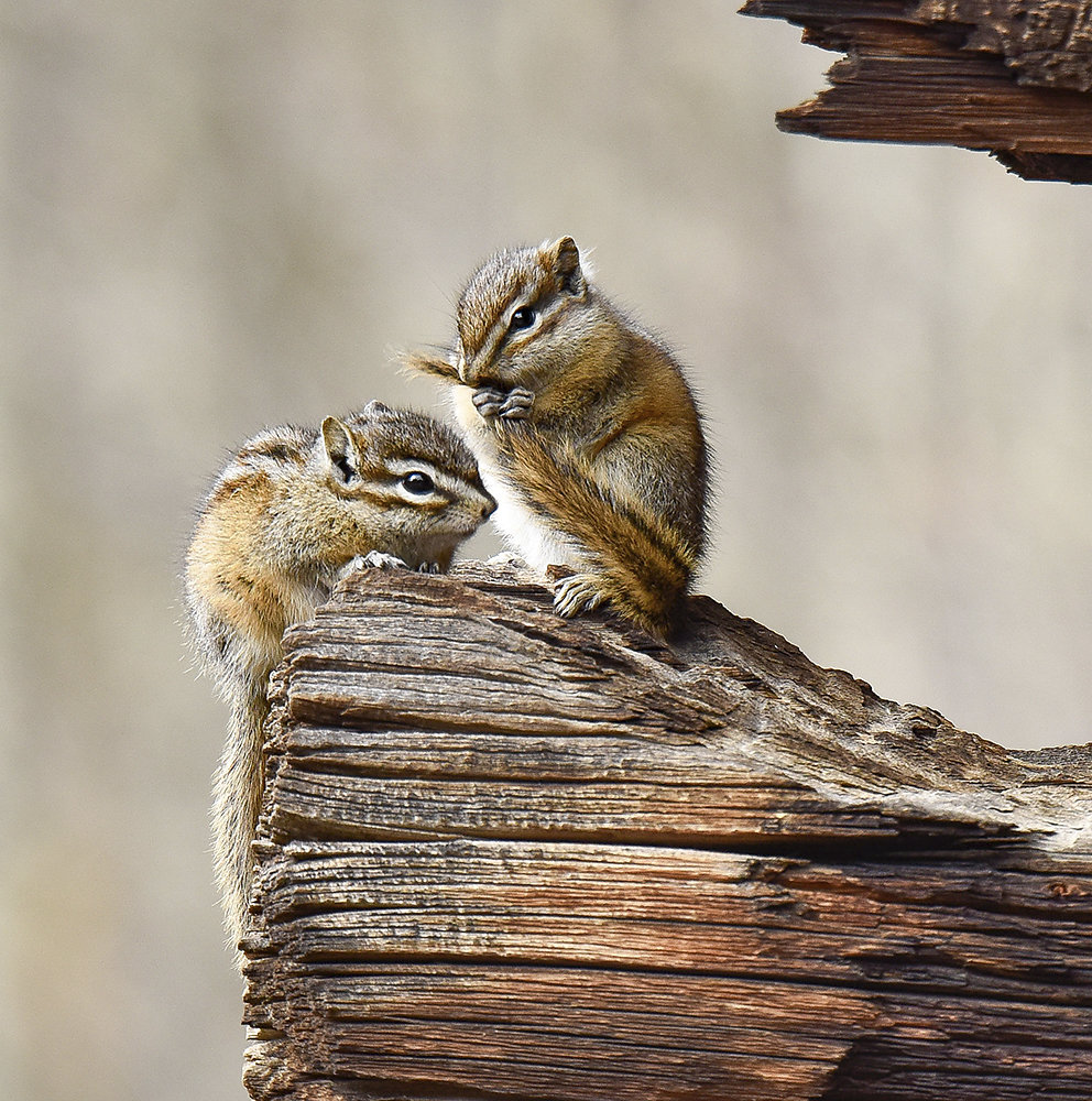 Colorado-Tiere.jpg