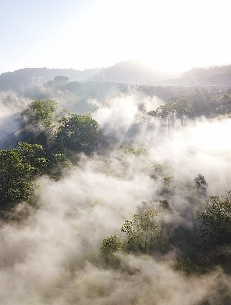 Costa-Rica-Regenwald.jpg